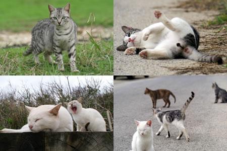 石垣島のネコ